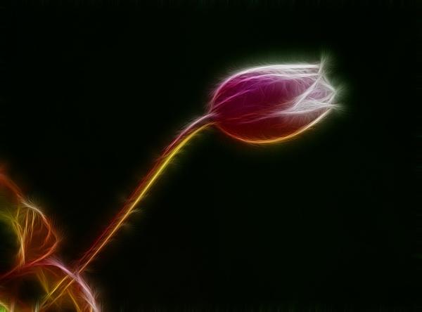 Blossom by mondmagu