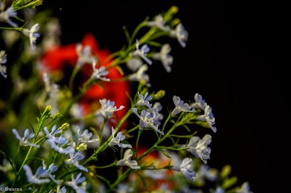 Flowers at Night by Swarnadip