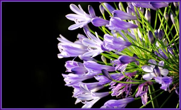 Purple Pose by Lynniesefforts