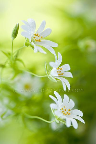 Spring Delights by jackyp