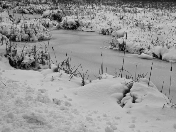 winter in Wisconsin #5 by handlerstudio