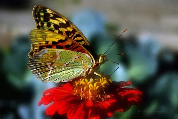 World of butterflies by baldi