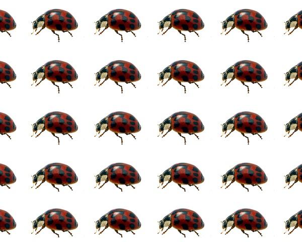 Ladybirds by victorburnside