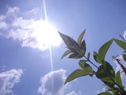 Sun,clouds,leaves