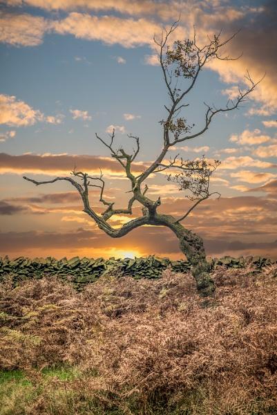 skeleton Tree by neeley