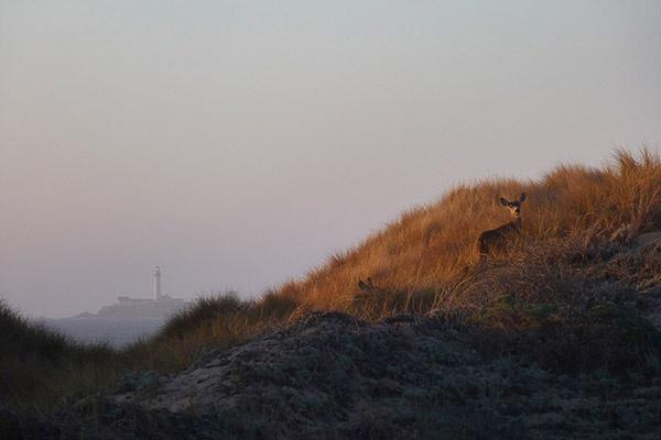 Even Deers Enjoy The Beach by Richard707