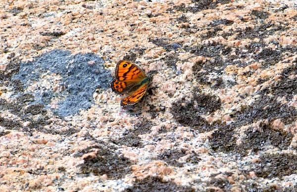 sommerfugl by MartaHari