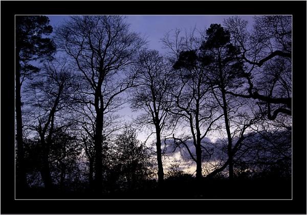 December Twilight by LynneJoyce