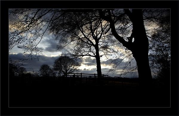 Winter Twilight by LynneJoyce