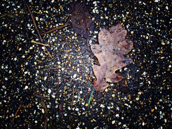 Leaf by neilfuller
