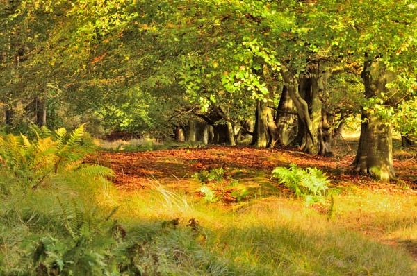 Autumn light by Scotscraig