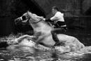 Appleby Horse Rider