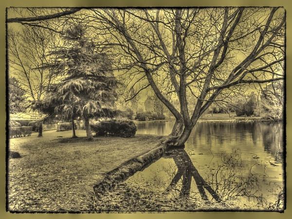 The Pond by trihelm