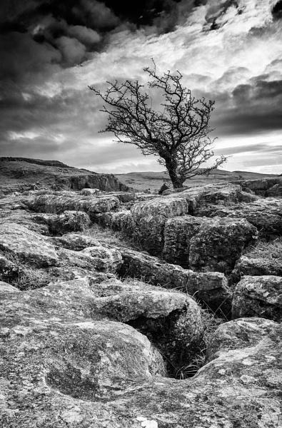 Gnarled Limestone by ade_mcfade