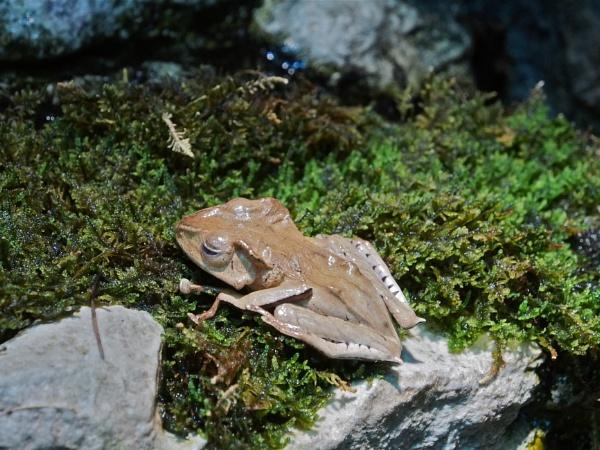 Frogs#1:  Winter in New York by handlerstudio