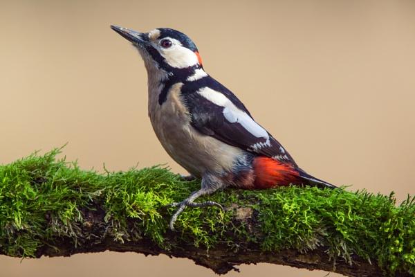 Woodpecker In The Winter Sun by MarkBullen