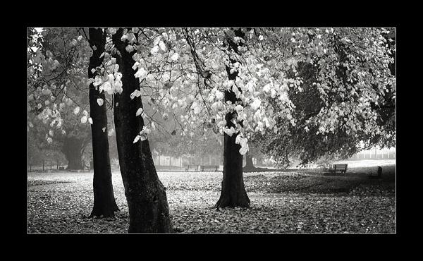 Autumn tonal by whatriveristhis