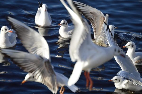 Gull Invasion by Brovy