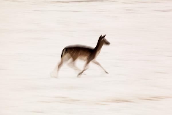 Wollaton Park Deers by Akif