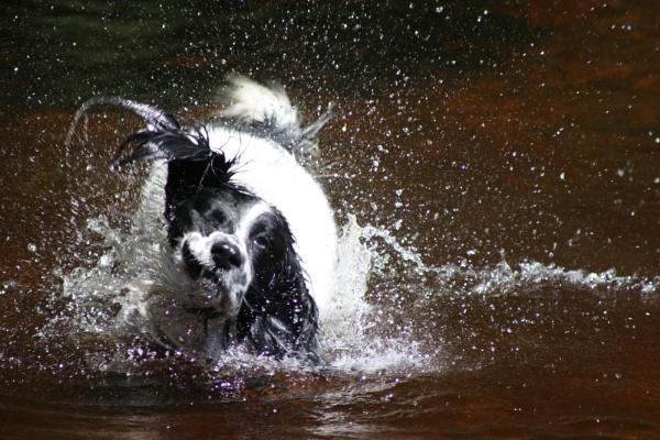 splish splash by percy66
