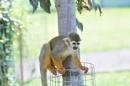 Cheeky Monkey by Pinny