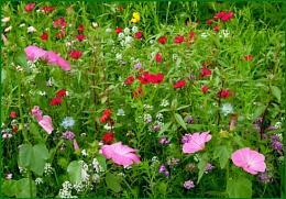 Wild Flowers 03.