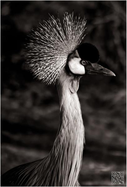 Crane by RWPhotoGraphix