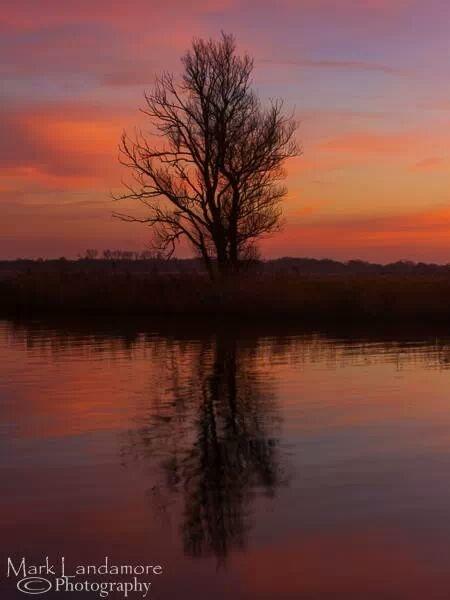 Lone Tree by mlanda
