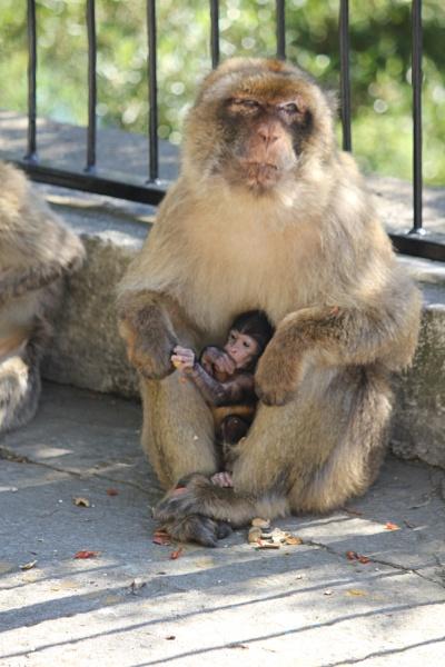 Mum & Baby by steevo