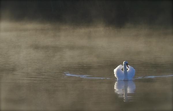 Clumber lake by footloose