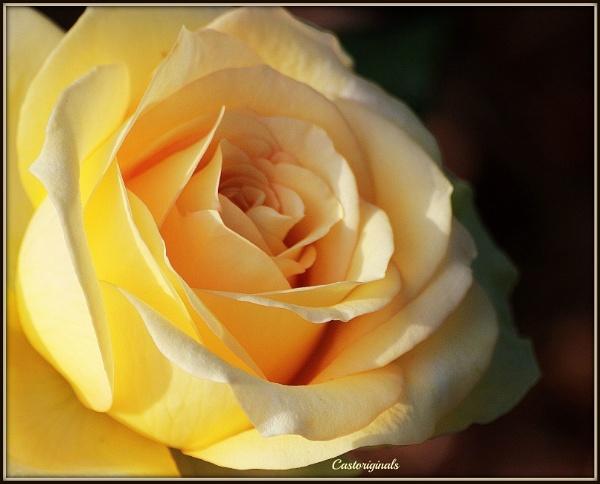 Rambling Rose 2 by Lynniesefforts