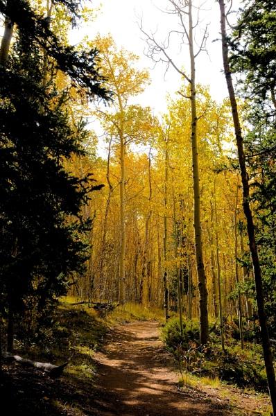 Colorado Autumn Trail by StuartDavie
