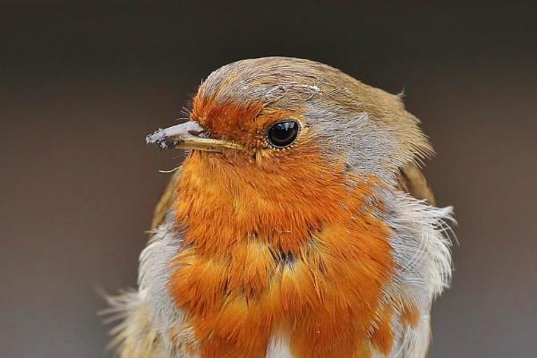 Robin by MBW