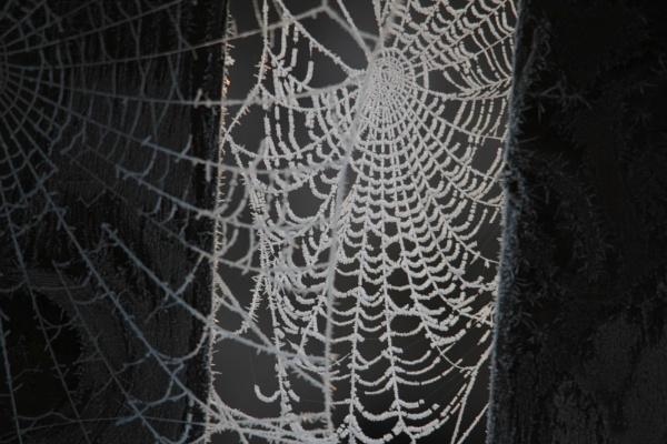 Frosty cobweb by MandsH