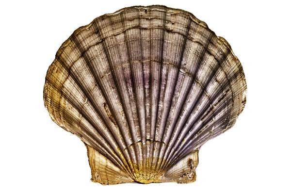 Shell by stevew10000