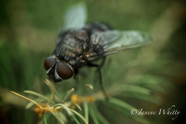 Big Fat Fly by janenewhitty