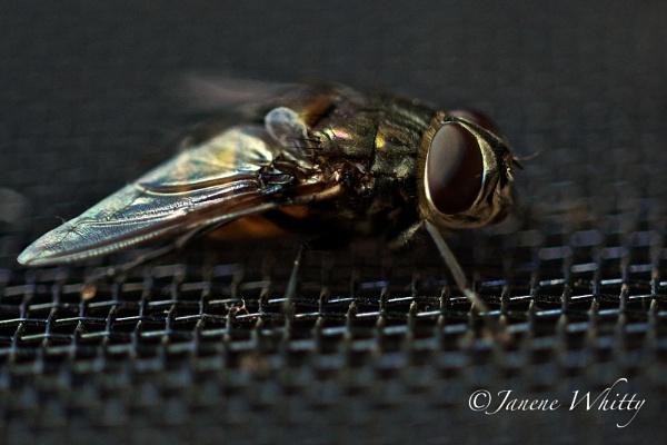 urban fly by janenewhitty
