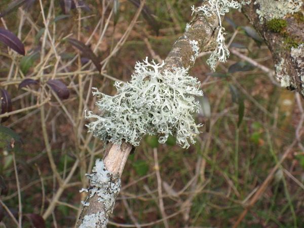 I\'m likin\' lichen by diplodicus
