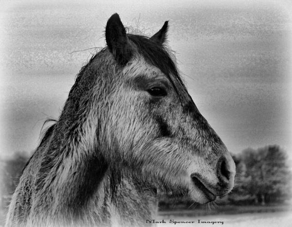 New Forest Pony by sluggyboy