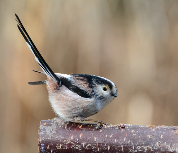 Another LTT by Holmewood