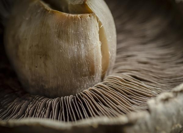 Mushroom by Fotomanic1