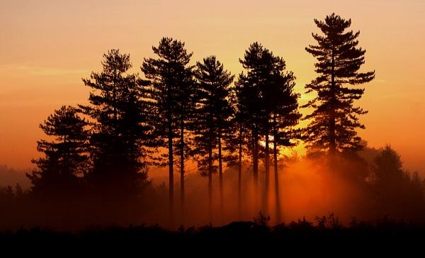 Bratley ridge pines by Gruditch