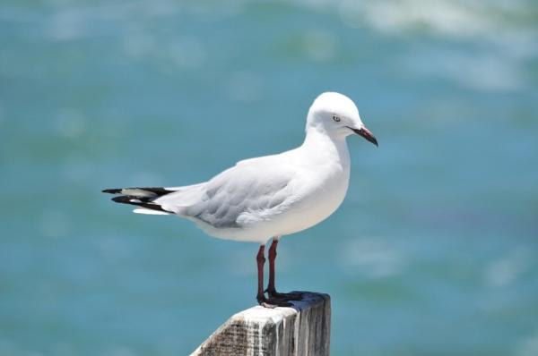 Peck -Peck by Kool_Kat