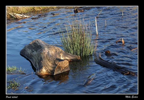 Pond detail by oldgreyheron
