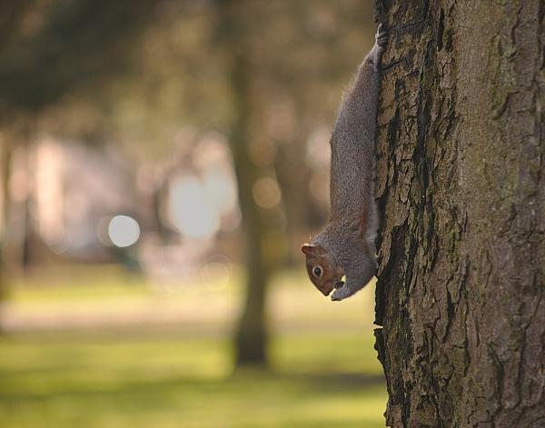The last nut by Steven_Tyrer