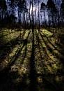 Brantingham Woods East Yorkshire by camramadbob