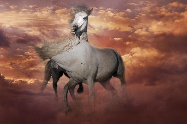 Horses in Clous by Msalicat