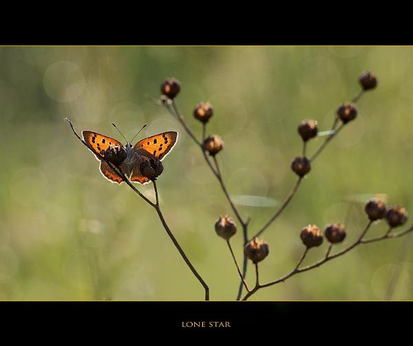 Lone Star by celestun