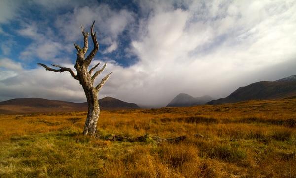 Lone Tree by footloose