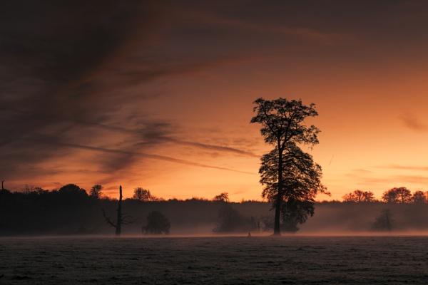 Sunrise in Ashridge by hammermad